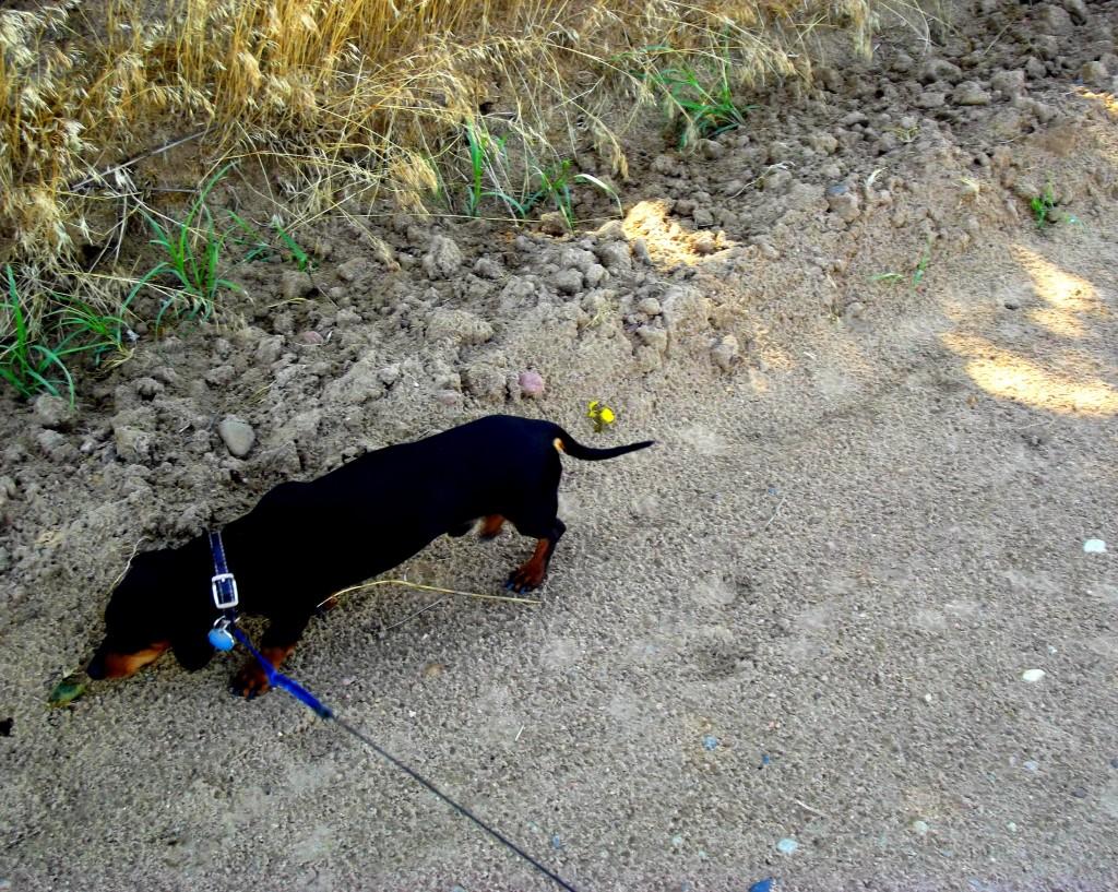 Ruger Walking