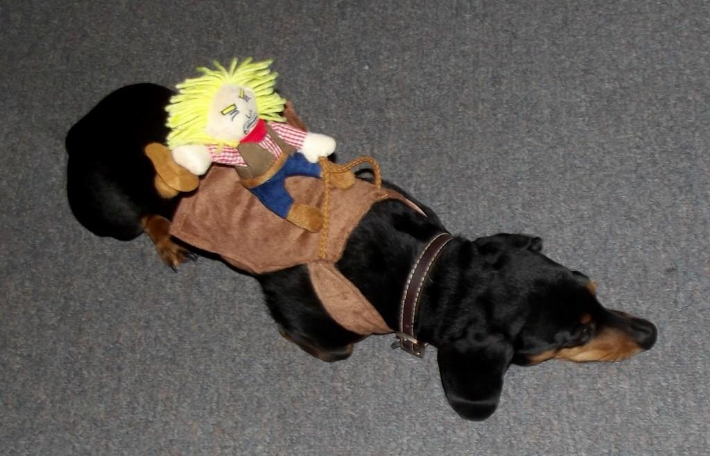 Cowboy Costume for Dog