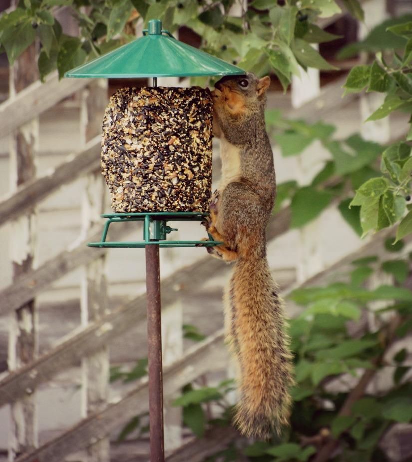 Squirrel #shop #cbias