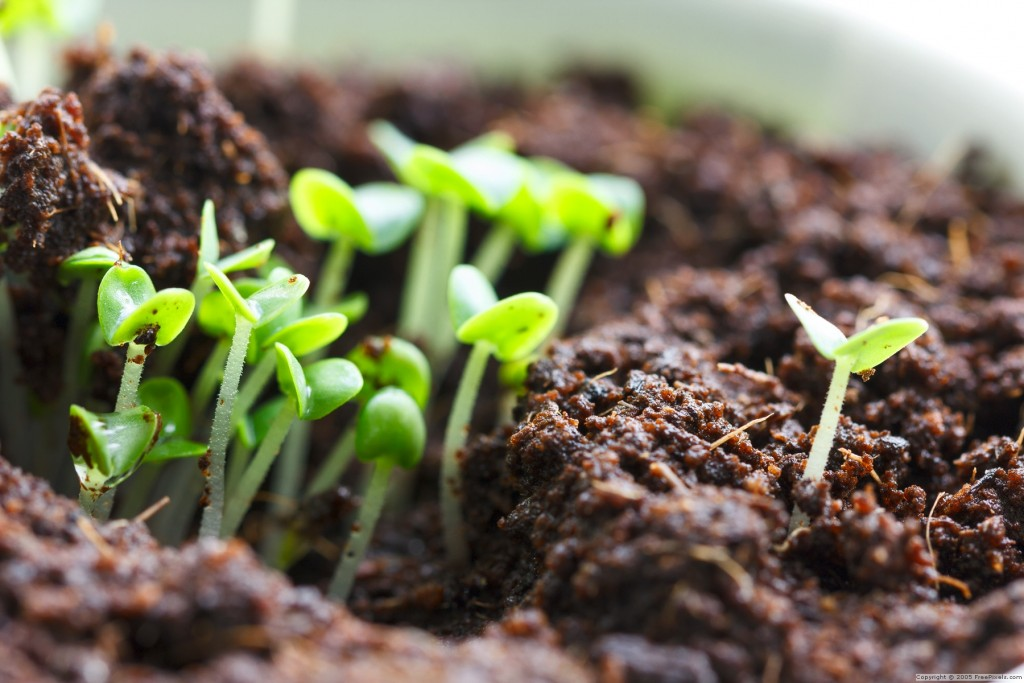 Plant Seed Sprouts