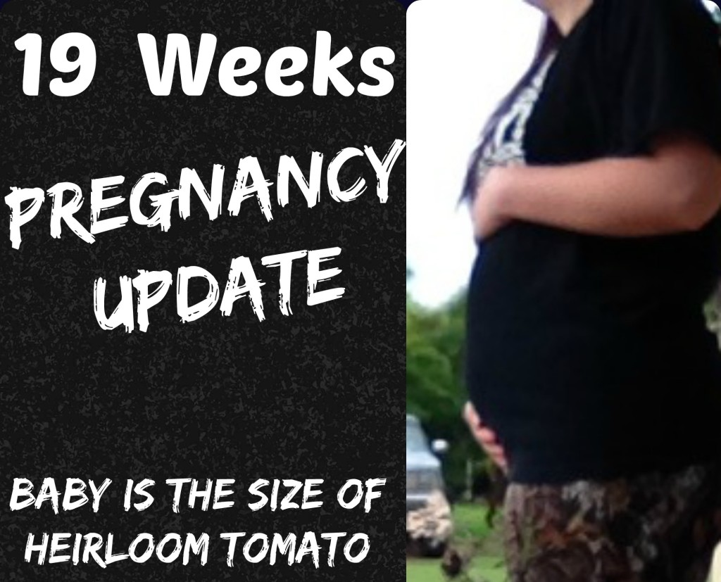 19 Week Pregnancy Update