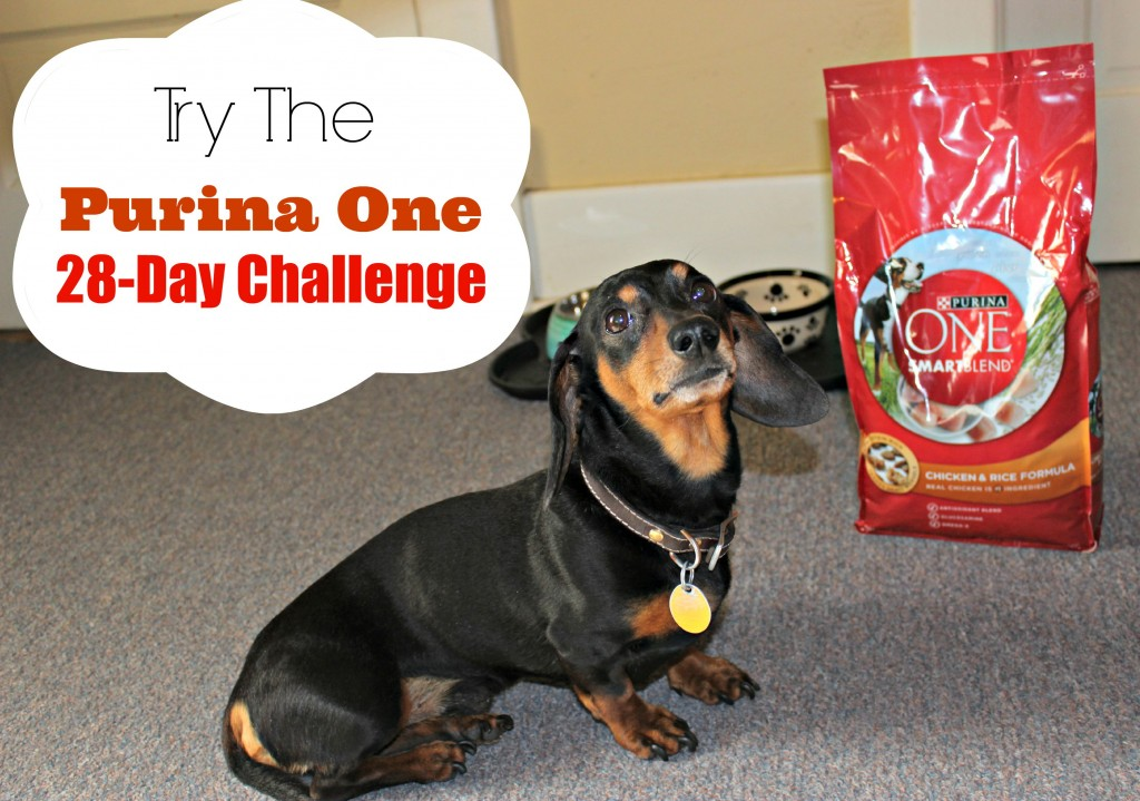 Purina ONE 28-day Challenge