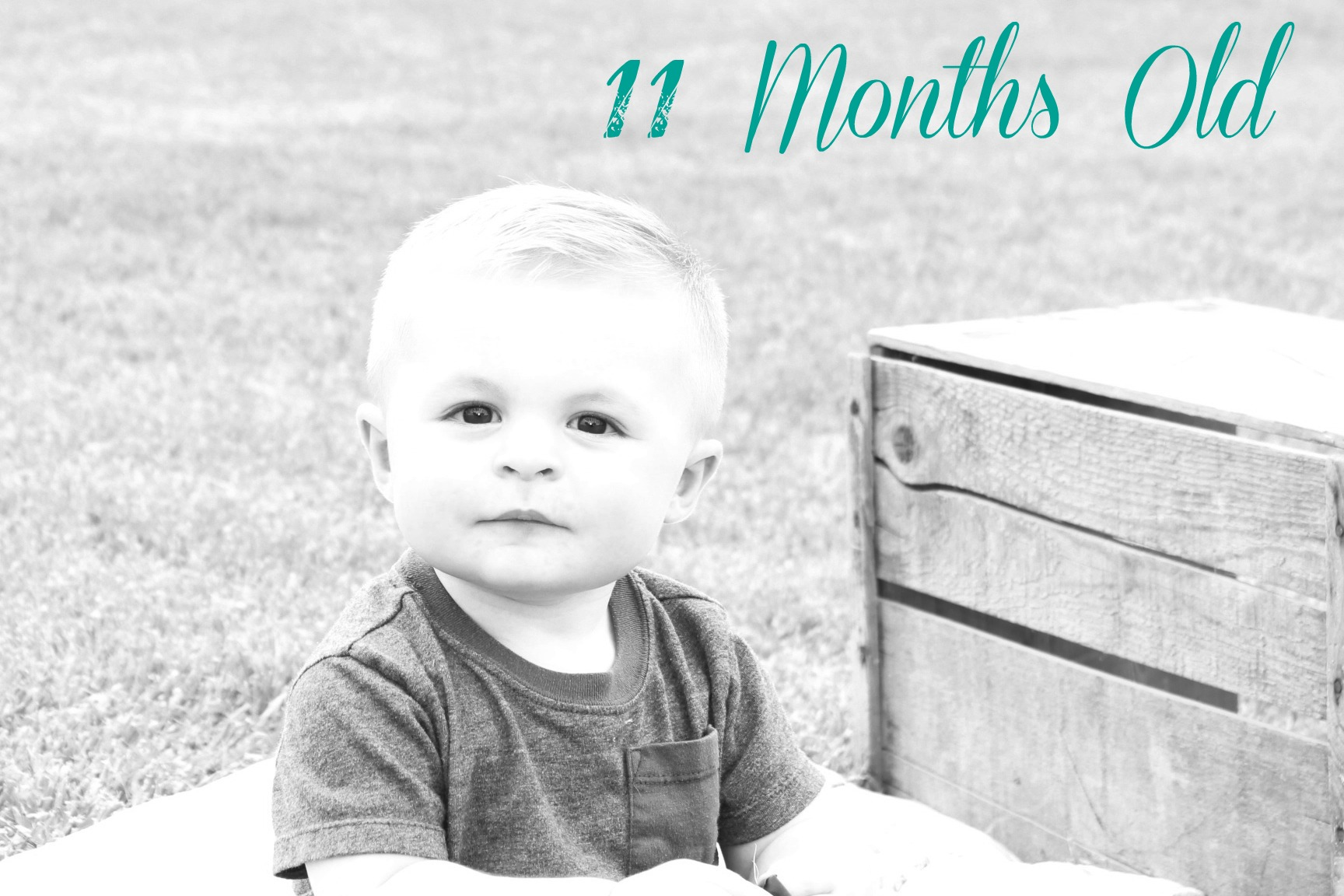 11 months old
