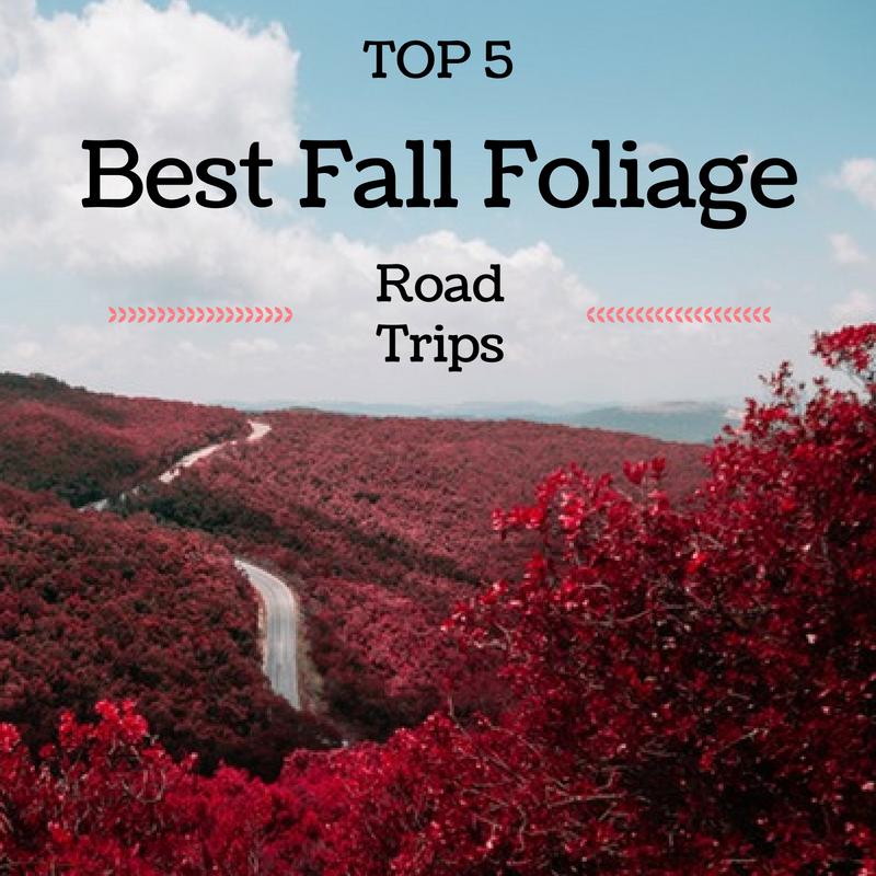 Top 5 Best Fall Foliage Road Trips To Travel This Year