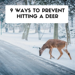 ways to prevent hitting a deer