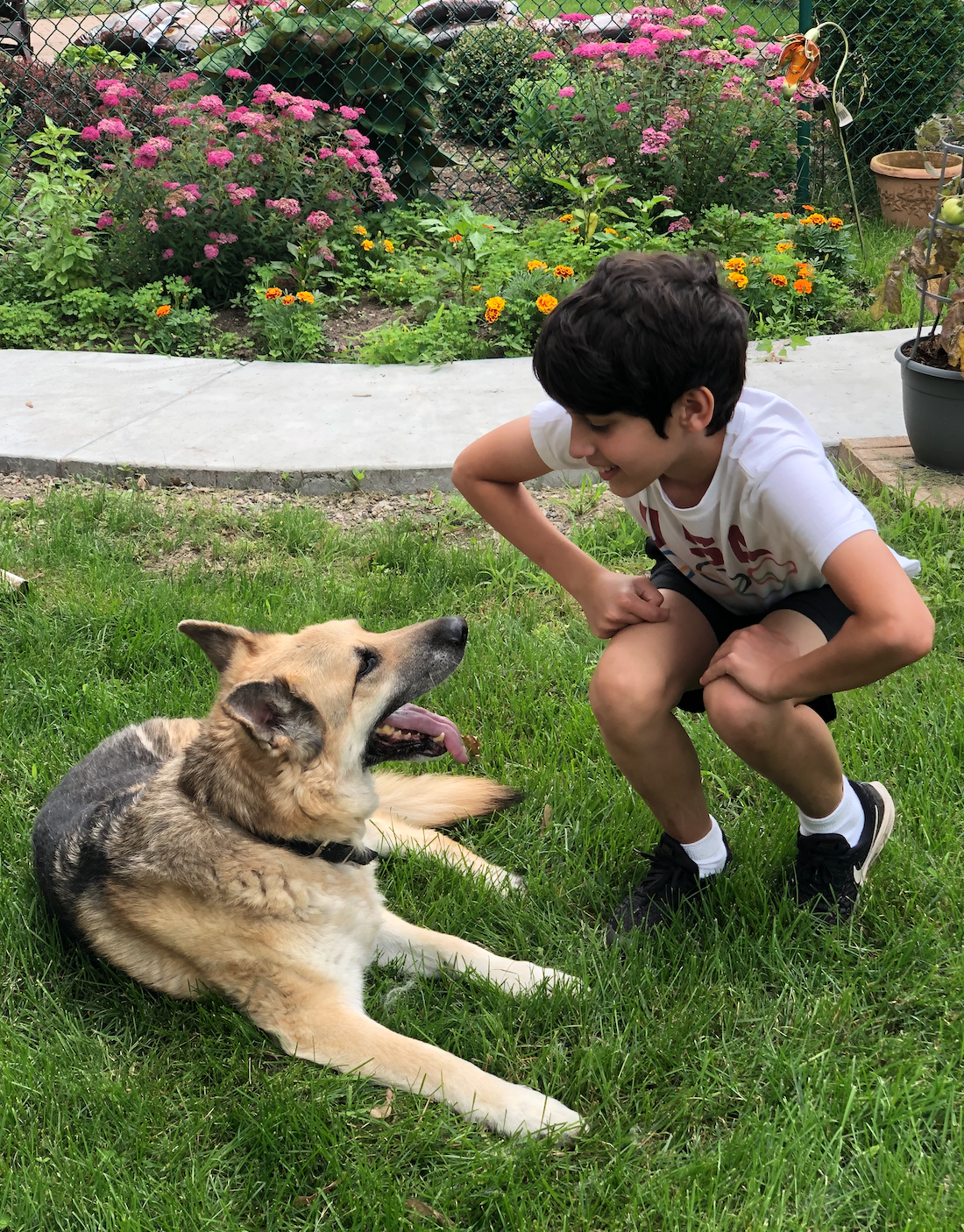 German Shepherd and Boy